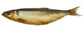 aringadorataaffumicata1