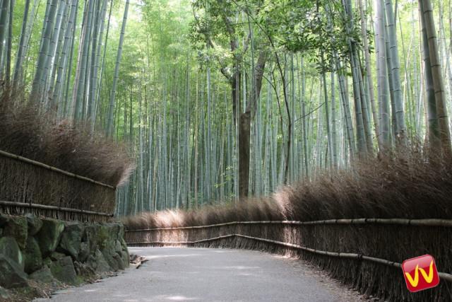 Foresta di Bambù Arashiyama