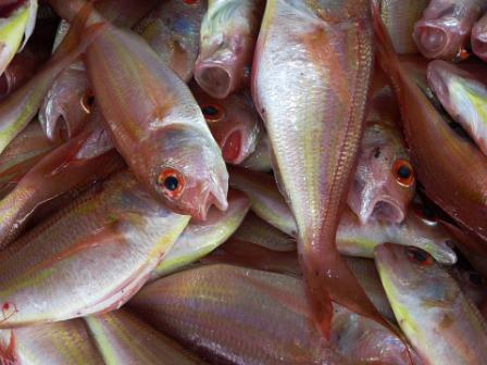mare pesci